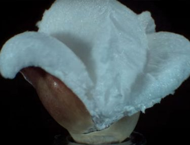 Popcorn Popping in Super Slow-Motion