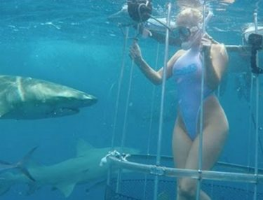Porn Star Bitten By Shark While Shooting Underwater Ad