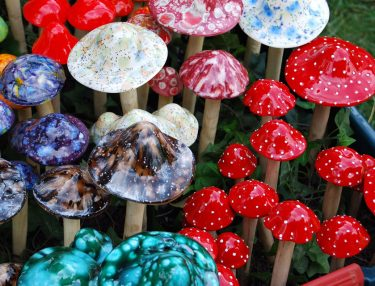 Shrooms - Magic Mushrooms