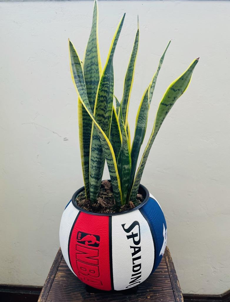 Spalding x Ol' Dirty Planters