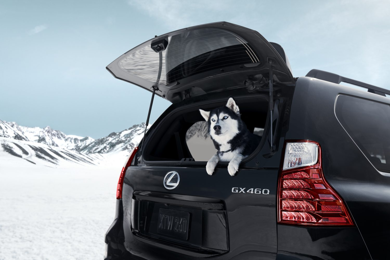 2022 Lexus GX 460 Black Line Special Edition